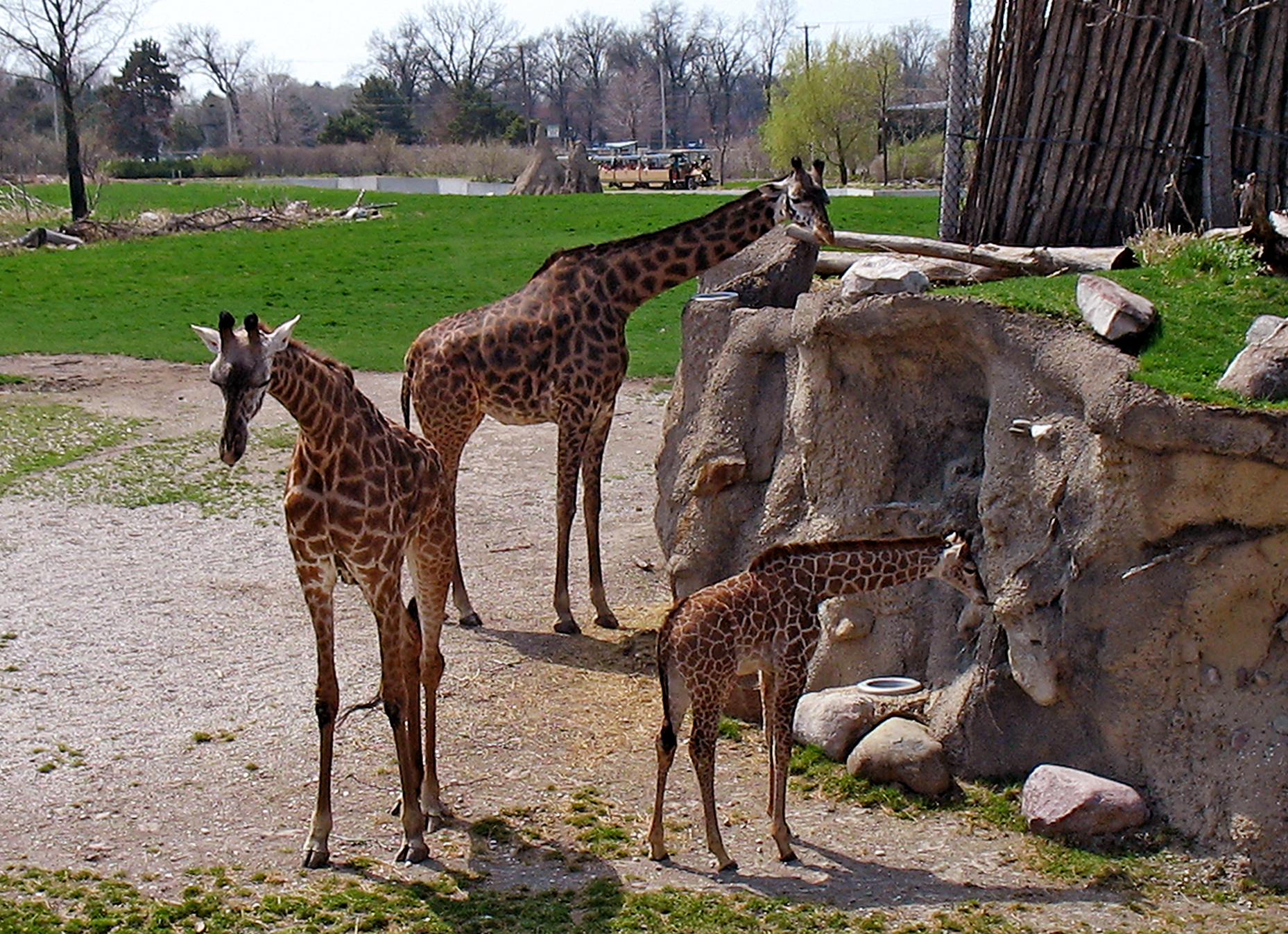 dublin_zoo