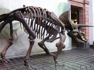 Un Musee a Francfort - 051
